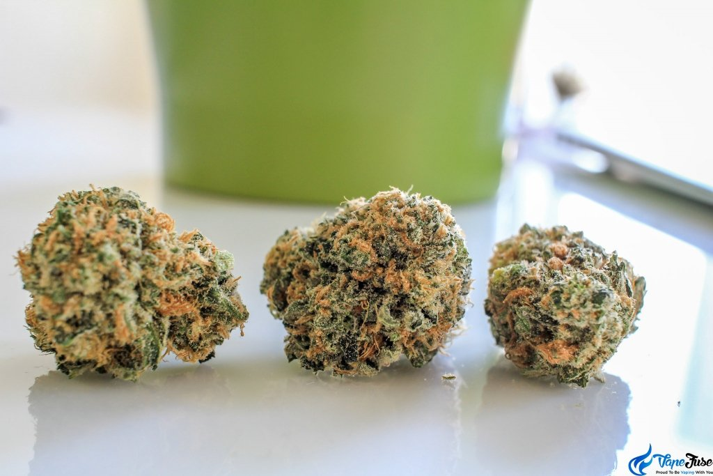 Beginner Cannabis Strains